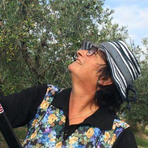 gloriana olijvenpluk