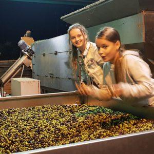 oogst olijven angel en charlie